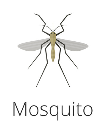 skin infections: Anopheles mosquito vector illustration. Illustration