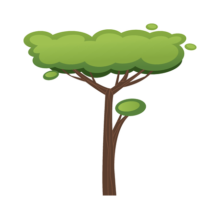 acacia: African tree vector illustration.