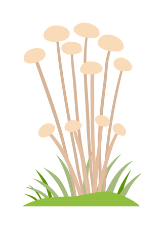 fairy toadstool: Toadstool illustration. Mushrooms toadstool on a white background. Mushroom toadstool. Toadstool toxic fairy natural. Toadstool vector. Toadstool isolated on white. Illustration