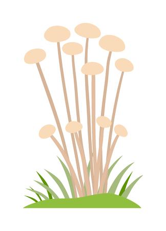 fairy toadstool: Toadstool illustration. Mushrooms toadstool on a white background. Mushroom toadstool. Toadstool toxic fairy natural. Toadstool vector. Toadstool isolated on white. Illustration