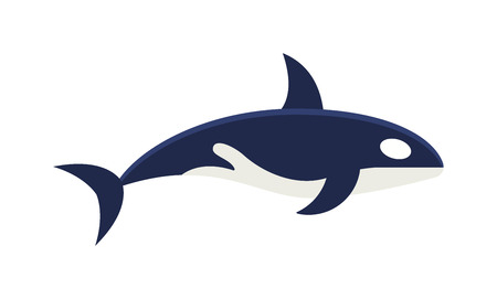 grampus: Killer whale Orcinus orca vector isolated on white background. Killer Whale mammal animal. Killer Whale wildlife animal. Killer Whale vector illustration. Killer Whale marine wild. Illustration