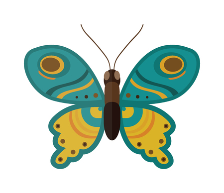 butterfly isolated: Flat butterfly vector. Flat butterfly isolated on white background. Flat butterfly vector illustration. Colored flat butterfly isolated on white background. Butterfly vector