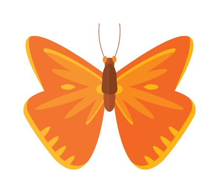 brassicae: Flat butterfly vector. Flat butterfly isolated on white background. Flat butterfly vector illustration. Colored flat butterfly isolated on white background. Butterfly vector