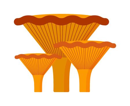 edible mushroom: Mushrooms Illustration on white background. Mushrooms vector illustrations. Mushrooms symbol isolated. Mushrooms organic nature. Mushrooms isolated Illustration
