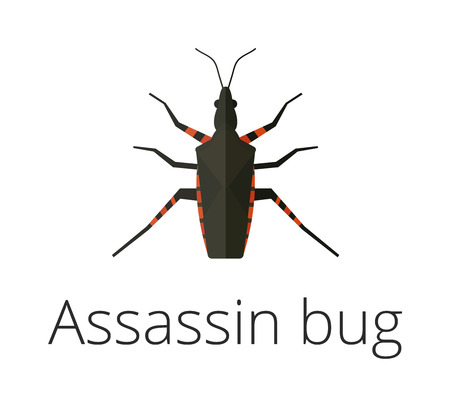 assassin: Assassin bug insect vector illustration. Close Up of a poisonous kissing bug also called an assassin bug spread of Chagas disease. Assassin bug insect vector. Assassin bug insect flat illustration. Illustration