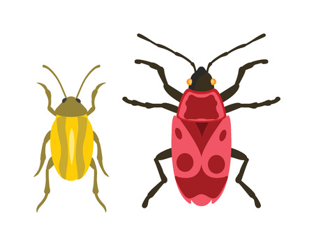 coleoptera: Beetles flat insect bug in cartoon style vector. Simple beetle insect wildlife. Cartoon bugs beetle color nature insect. Vector beetle cartoon style bug.