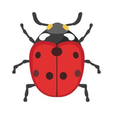 mosca caricatura: insecto vector de la mariquita aisladas sobre fondo blanco. escarabajo de la mosca de la mariquita roja del verano plana. insecto mariquita primavera. Mariquita linda del insecto vector de dibujos animados. diseño hermoso insecto.