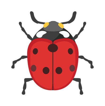 animal icon: Ladybug vector insect isolated on white background. Flat red ladybug summer fly beetle. Spring ladybug insect. Ladybug cute cartoon insect vector. Insect beautiful design.