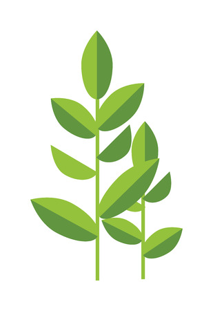 tea plant: Tea plant green vector leaves isolated on white. Some tea plant nature herb. Flat tea plant herb drink. Tea plant healthy drink.