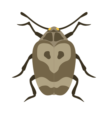 big cartoon: Beetle flat insect bug in cartoon style vector. Simple beetle insect wildlife. Cartoon bug beetle color nature insect. Vector beetle cartoon style bug.