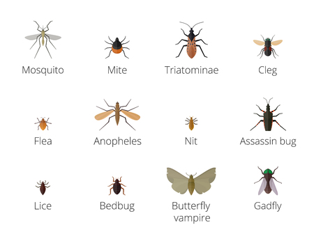 Insect parasites . Bug Insect parasites Set isolated on white background. Insect skin parasites biology bugs. Insect skin parasites flying bugs. Set funny insect skin parasites Illustration