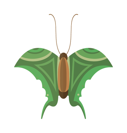 brassicae: Flat butterfly . Flat butterfly isolated on white background. Flat butterfly illustration. Colored flat butterfly isolated on white background. Illustration