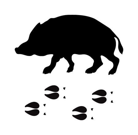 animal silhouette: Wild boar animal black silhouette and wild animal predator symbol. Predator silhouette. Wild life black animal silhouette. Black silhouette wild animal zoo vector. Illustration