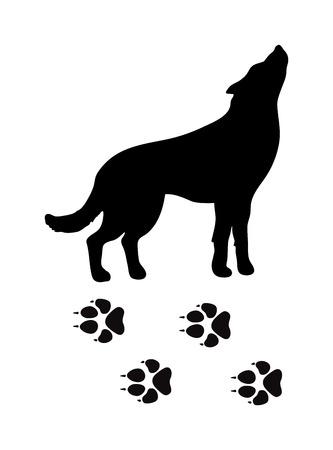 animal silhouette: Wild wolf animal powerful hunter black silhouette and wild animal predator symbol. Predator silhouette. Wild life black animal silhouette. Black silhouette wild animal zoo vector.