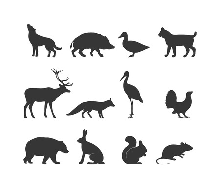 wild life: Wild animals black silhouette and wild animal symbols. Predators silhouette. Wild life animal  black silhouette. Black wild animals silhouette wild animal zoo vector. Illustration