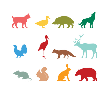 animal silhouette: Wild animal silhouette and wild animal symbols. Predator silhouette. Wild life animal silhouette. Colored silhouette wild animal zoo vector.