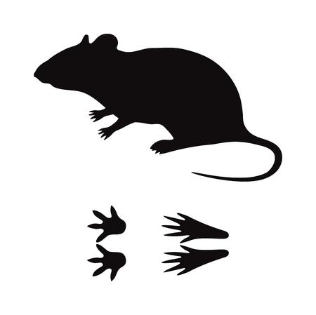 animal silhouette: Wild rat mouse animal black silhouette and wild animal predator symbol. Predator silhouette. Wild life black animal silhouette. Black silhouette wild animal zoo vector. Illustration