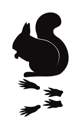 animal silhouette: Wild squirrel animal black silhouette and wild animal predator symbol. Predator silhouette. Wild life black animal silhouette. Black silhouette wild animal zoo vector.