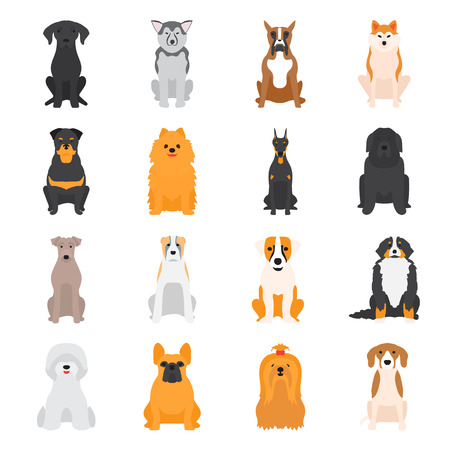 saint bernard: Vector illustration of different dogs breed isolated on white background. Flat dogs breed vector icon illustration, flat dogs breed isolated vector. Dog breed flat silhouette