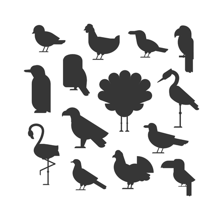 white flight feathers: Birds black silhouette animal drawing and birds black silhouette design wildlife. Wings graphic birds black flight freedom birds. Vector Collection of nature black bird wildlife animal silhouettes. Illustration