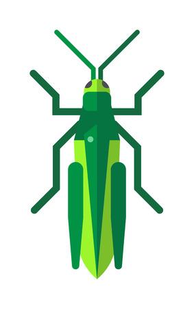 Nature grasshopper, green cartoon locust and cute flat grasshopper. Wild creature antenna invertebrate locust. Cute grasshopper cartoon agricultural zoo large green locust nature insect flat vector.