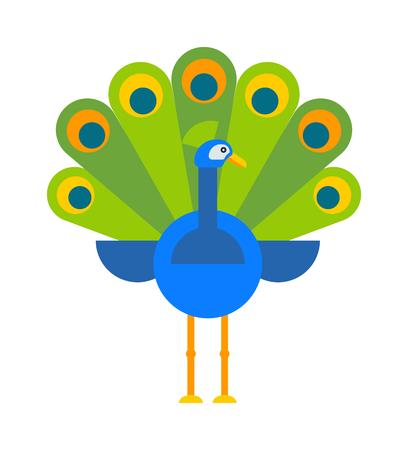 peafowl: Beautiful nature bird peacock and wildlife bright peacock. Tropical peafowl bright elegance bird. Beautiful peacock colorful blue beautiful nature bird and wildlife bright tropical peafowl flat vector