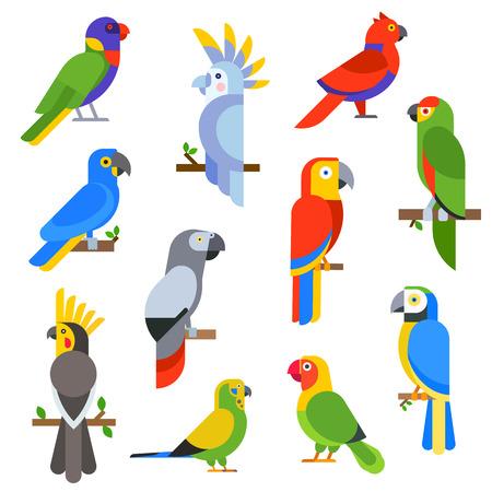 ara: Cartoon parrots set and parrots wild animal birds. Tropical parrots feather zoo birds, tropical fauna macaw flying ara. Various cartoon exotic birds set with parrots vector illustration. Illustration