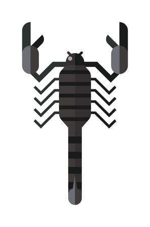 poisonous insect: Scorpion black silhouette tattoo poison insect and scorpion silhouette poisonous claw graphic tail. Scorpion silhouette drawing horoscope. Scorpion black silhouette insect animal vector.
