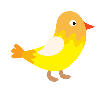 canary bird: Yellow bird little animal and beak small yellow bird. Yellow young cartoon canary bird. Color yellow canary baby funny bird. Cute happy little yellow bird easter chick with wings outstretched vector.