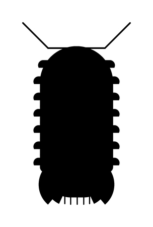 centipede: Animal insect centipede and wildlife nature bug centipede. Centipede venomous poisonous predator with many legs and danger outdoors centipede. Centipede millipede cartoon posing flat insect vector.