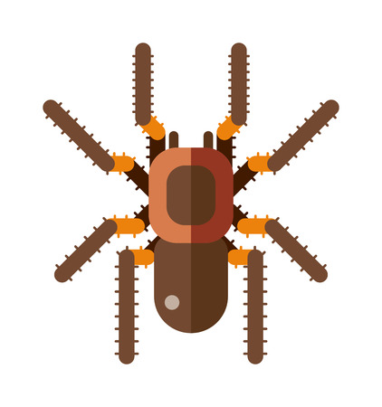 poisonous insect: Spider silhouette arachnid fear graphic and spider flat silhouette scary, animal poisonous design. Spider silhouette nature phobia. Spider insect danger silhouette vector icon.