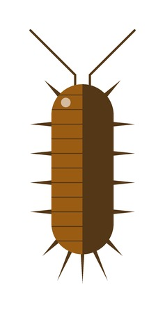 venomous: Animal insect centipede and wildlife nature bug centipede. Centipede venomous poisonous predator with many legs and danger outdoors centipede. Centipede millipede cartoon posing flat insect vector.