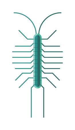 oruga: ciempiés insecto animal y la naturaleza de la fauna insecto ciempiés. Ciempiés venenoso depredador venenosa con muchas piernas y el peligro al aire libre ciempiés. Ciempiés ciempiés de dibujos animados presenta insecto vector plana. Vectores