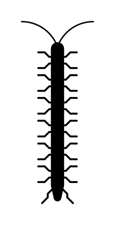 poisonous insect: Animal insect centipede and wildlife nature bug centipede. Centipede venomous poisonous predator with many legs and danger outdoors centipede. Centipede millipede cartoon posing flat insect vector.