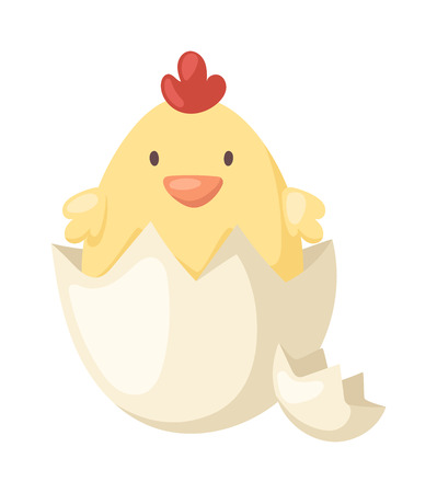 Fluffy little cartoon chick hatched from an egg and animal yellow baby cute chick in egg. Chick in egg small farm spring newborn animal. Cartoon yellow newborn chicken in the broken egg shell vector. Illustration