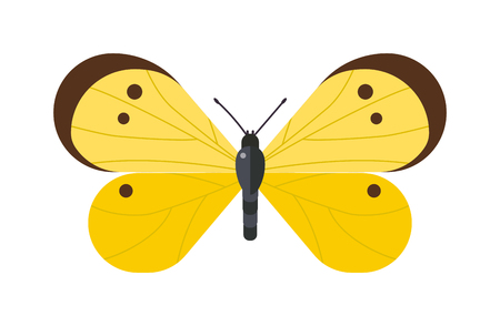 white butterfly: Flat butterfly vector. Flat butterfly isolated on white background. Flat butterfly vector illustration. Colored flat butterfly isolated on white background. Butterfly isolated. Butterfly cartoon style