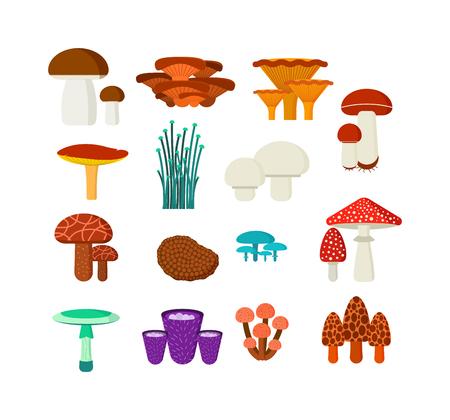 Champignons illustration vectorielle définie. Différents types de champignons isolés sur fond blanc. champignons Nature pour le style plat cuire les aliments et les champignons vénéneux