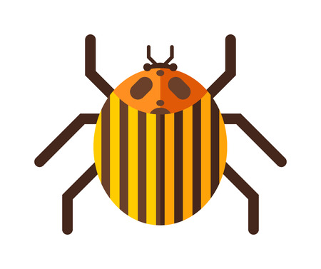 entomology: Beetle flat insect bug in cartoon style vector illustreation. Bug isolated. Bug icon flat style. Bug insect. Cartoon bug gold color Illustration