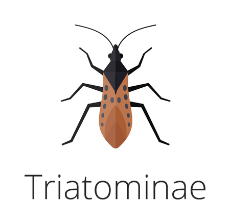Triatominae skin parasite insect bug. Bug insect triatomine isolated on white background. Insect skin parasite biology bugs. Skin parasite triatomine flying bugs. Triatomine bugs.