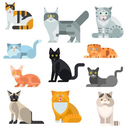 Katzenrassen Poster niedliche Haustier Tier-Set Vektor-Illustration. Katzenzucht Tier und Comic-Katze Rasse gesetzt. Säugetier Charakter menschlicher Freund Katzenzucht Tiere Icons. Charakter Katze Porträt Freund katzenartig.