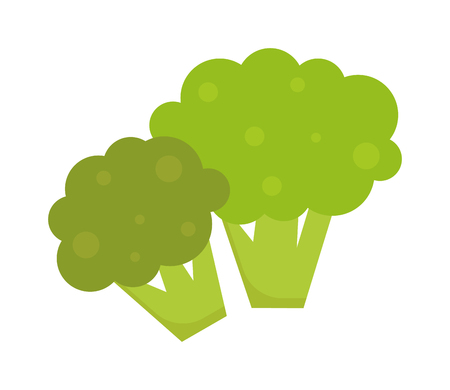 isolated ingredient: Fresh green broccoli isolated on white background vegetarian, raw, healthy food vector. Broccoli vegetarian raw and healthy organic broccoli. Broccoli freshness diet eating ingredient. Illustration