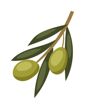 olive green: Olive branch with green olives on a white background healthy organic mediterranean fruit vector illustration. Green olive branch and healthy olive branch food. Vegetarian olive branch.