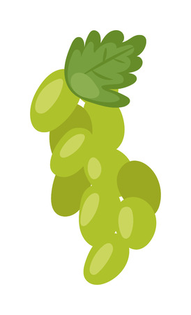 bunch: Green grape bunch isolated vine fruit nature berry healthy diet food vector. Cartoon fresh grapes bunch and dessert winery grapes bunch. Sweet grapes bunch, natural grapes bunch.