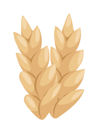 barley field: Ears of wheat agriculture food natural vector illustration. Agriculture food wheat ear and healthy wheat ear. Nature grow gold rye wheat ear, autumn barley field harvest wheat ear.