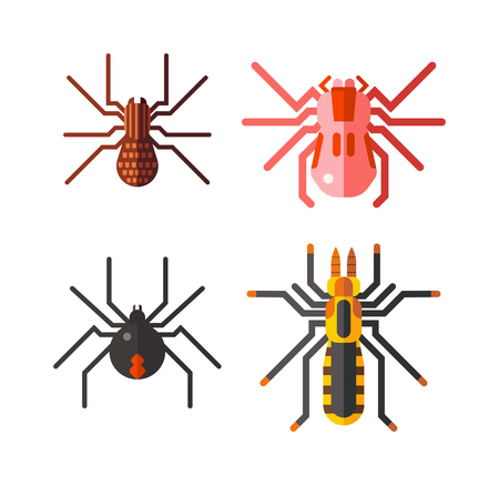 with orange and white body: European spiders, collection isolated on white background vector. Large tarantula spiders isolated with an orange color body. Spiders isolated nature animal, insect brown predator wild danger spider.
