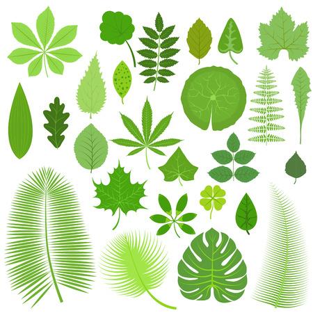 Vector hojas Conjunto tropical. Colección hojas de los árboles verdes. Hojas verdes naturales fijados. Hojas conjunto de elementos florales del color del arte del jardín. Tropical deja colección. Naturales verdes hojas tropicales conjunto. hojas planas. Ilustración de vector