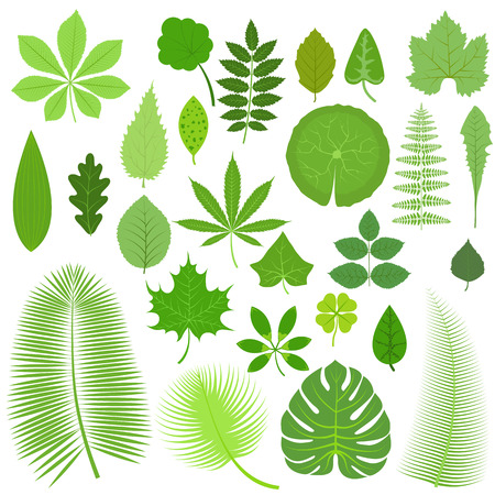 four leafs clover: Vector tropical set leaves. Collection green tree leaves. Natural green leafs set. Leafs set element floral color garden art. Tropical leaves collection. Natural green tropical set leaves. Flat leafs.