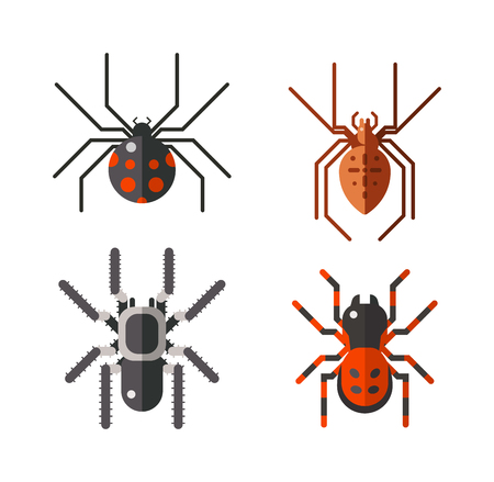 Vector poisonous spiders. Poisonous spiders arachnid danger isolated nature and fear insect poisonous spiders. Poisonous spiders leg phobia dangerous scary. Poisonous spiders horror poison. Illustration
