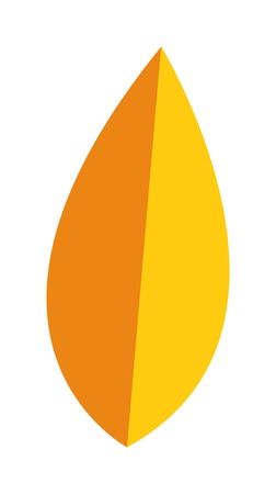 flat leaf: yellow leaf on white background. Yellow leaf autumn season and nature yellow leaf color plant foliage. Yellow leaf bright decoration and design yellow leaf golden natural october colorful flat leaf. Illustration