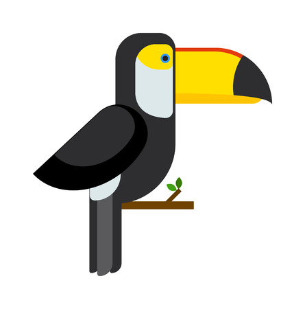 amazon: Exotic toucan and wild toucan tropical bird. Toucan beautiful zoo brazil character, cute toco amazon fauna. Toucan ramphastos toco sitting on tree branch and tropical wild colorful bird flat vector.